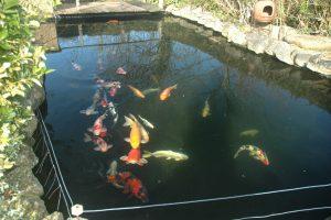 Форелевые водоемы